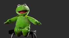 33/52 Still Life (Sean Kelly Aus) Tags: frog kermit 2012 week33 strobist 522012 52weeksthe2012edition weekofaugust12