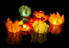 Water Lilies (Serge Freeman) Tags: reflection water night lights colours lilies lanterns