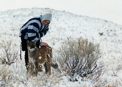 Making Friends with a Mountain Lion (MInty_Verbeten) Tags: winter mountain agate animal animals colorado wind wildlife lion lions planet pumas prairie puma panther cougar mountainlion refuge wildanimals kiowa mountainlions prairiewindwildliferefuge