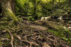 An Enchanted Forest  ♦ Une forêt enchantée (Chizuka2010) Tags: longexposure tree nature water forest waterfall woods pennsylvania roots fairmount hdr enchantedforest chutes rickettsglen racines rickettsglenstatepark pennsylvanie rickettsglenn forêtenchantée chizuka canoneos60d mygearandme chizuka2010 luciegagnon
