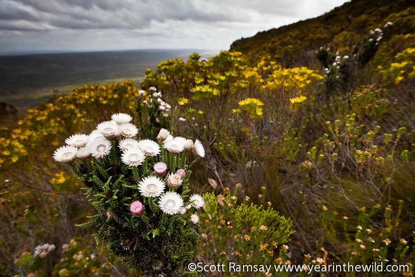 De Hoop Nature Reserve - South Africa