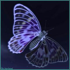 Comme un vitrail ... (Tim Deschanel) Tags: life art animal butterfly landscape tim lab sl papillon dh second paysage exploration deschanel dhsl01 dhsl