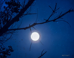 Once in a Blue Moon (RestLeSsD) Tags: trees sky moon photoshop stars shadows forsale artistic sold digitalart manipulation buy sell bluemoon greetingcards canvasprints fineartamerica artisticassignments ronasbluemoon