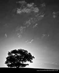 A Story Of Clouds And A Tree. (ziggystardust111) Tags: blackandwhite tree monochrome silhouette clouds simple shepway wwwvincewinterphotographycouk ziggystardust113hotmailcouk