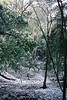 FSC00719 (KawaiDaisuke) Tags: winter snow kyoto 京都 雪 冬 kurama 鞍馬