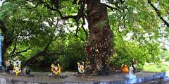 IMG_8416a (Raju's Temple Visits) Tags: favourite ayyanar sorimuthu kaaraiyar