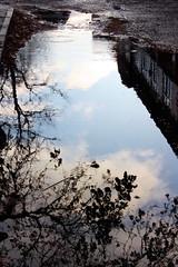La pioggia fa riflettere.. (Toka83) Tags: water rain acqua pioggia riflesso