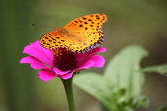 Floating (Sandeep Santra) Tags: india flower detail macro nature closeup canon butterfly garden eos dof bokeh pov sikkim gangtok 500d incredibleindia efs55250mmf456is unlimitedinsectslevel1