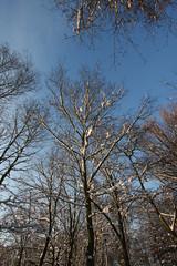 Ik heb d'r zin an (grwsh.marcel) Tags: trees winter light snow cold tree canon licht bomen hiver sneeuw boom koud 40d canon40d