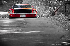 1967 Ford Mustang (BenjiAuto (Ratet B. Photographie)) Tags: road trip red bw usa france cars ford sport america us nikon muscle gear nb exotic american 1967 shelby shooting autos mustang gt luxury supercar colouring supercars 18105 fastback sance bullit gt500 55200 gt350 d90 ratet worldcars hypercars selectiv
