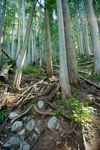 Wedgemount Lake trail