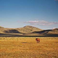 Freedom (Doru Oprisan) Tags: ifttt 500px freedom mongolia horse desert gobi asia central travel adventure rugged wild free sunset nikon d700 landscape nature vast