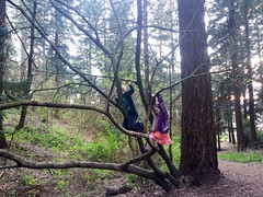 natural jungle gym (dolanh) Tags: zooey treeclimbing lucas tree mttaborpark