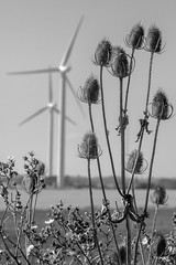 The Breeze (B&W edit) (Sean Hartwell Photography) Tags: bradwell bradwellonsea windfarm nationalgrid thistle wind renewable energy essex dengie england
