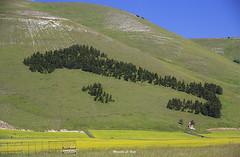 (M@Riforever) Tags: campo paesaggio collina castellucciodinorcia umbria