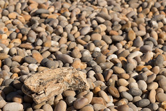 Driftwood (Mr Green Light) Tags: beech weymouth chesil unitedkindom 2016 andycash holiday