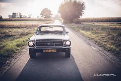 Mustang `67