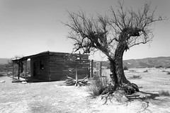 Desert (Javier DazG) Tags: blancoynegro blackwhite blackandwhite blanconegro paisaje desierto arbol casa western nature old