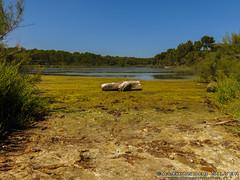 Parc Natural 1 (Lanky8804) Tags: esgrau parcnatural salbuferadesgrau menorca mahn islasbaleares spain es