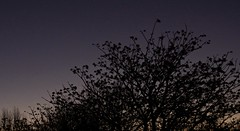Twilight Starlight (Padmacara) Tags: d7100 tamron28300 shadowlight outdoors tree star lastlight