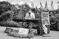 Mellow Zebra (James Hodgson Photography) Tags: black white mellow zebra street photography fuji x100s piano brighton pavilion gardens honeymoon mellowzebra