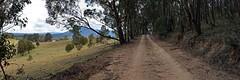 Kanimbla Road (Merryjack) Tags: pano 31