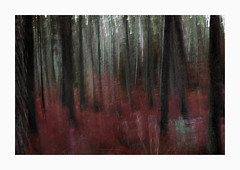 Redwood (www.damientaylor.co.uk) Tags: intentionalcameramovement multipleexposure trees woods red alteredreality blurred blurry shake forest creative fineart