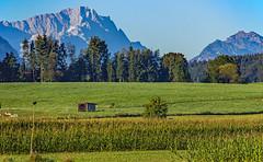 lush Bavarian meadows (werner boehm *) Tags: wernerboehm zugspitze sindelsdorf bayern landscape alpen