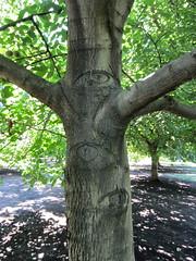 watcher (Black Cat Bazaar) Tags: california ca trees eyes walnut orchard summertime chico nord watcher