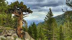 Sonora Pass Tree HDR (DanFroistad) Tags: mountains sierranevada hdr sonorapass 5xp