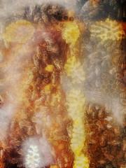 Wenn Bach Bienen gezchtet htte ~ If Bach would have kept Bees - Museum Schlo Orth (hedbavny) Tags: wien orange nature museum insect licht sterreich nationalpark natur spuren bee innen bach gelb inside insekt beehive glas vitrine biene honig kunstlicht wachs orth johannsebastianbach exponat bienenstock bienenwachs arvoprt zucht prt orthanderdonau donauauen bienenzucht bienenwabe zchten bienennest ausstellungsstck nationalparkzentrum paert honiggelb schlosorth arvopaert wennbachbienengezchtethtte einsichtig museumschlosorth glasbienenstock