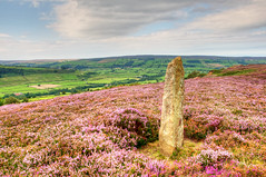 The Moors (Jon Parkes Photography) Tags: nikon heather moors northyorkshire moorland d90 myfuji jpphotography anythingnikonexceptpeople