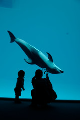 "contact (""KIUKO"") Tags: silhouette aquarium child dolphin nagoya       portofnagoyapublicaquarium"
