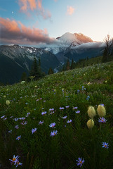 The Evenings Last Light (D Breezy - davidthompsonphotography.com) Tags: trees sunset mountains canon washington hills pacificnorthwest wildflowers mtrainier 5dmarkiii usamtrainiernationalpark