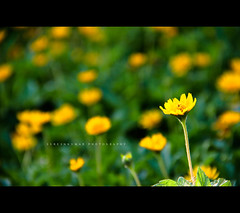 "Not just color, it's an attitude • <a style=""font-size:0.8em;"" href=""http://www.flickr.com/photos/86056586@N00/7934320124/"" target=""_blank"">View on Flickr</a>"
