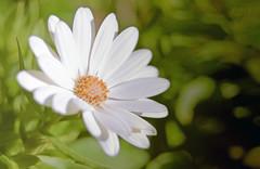 give me some of spring (PheCrew) Tags: flower fiore soken phecrew