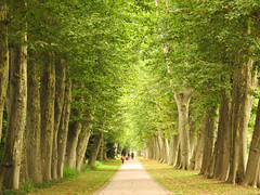 Plane Avenue in the Castle Park (Habub3) Tags: park street city travel holiday plant tree green castle nature forest plane canon germany point landscape deutschland licht search reisen flora europa europe stuttgart walk urlaub natur powershot stadt grn avenue schloss vanishing landschaft wald baum vacanze stadtpark 2012 citypark allee spaziergang g12 stuttgart21 platanen serach plantane schlospark habub3 mygearandme