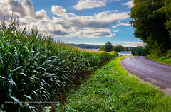 Bottom Land Bounty (Jeff Newcomer) Tags: summer corn farm harvest newhampshire walpole barnroad