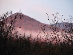 natural light (LauraSorrells) Tags: autumn mist home naturallight thecove unprocessed sharptop thewildwood
