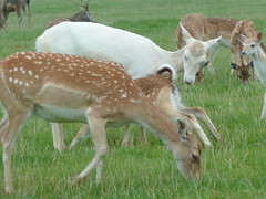 """Longleat Safari Park • <a style=""""font-size:0.8em;"""" href=""""http://www.flickr.com/photos/81195048@N05/8017684254/"""" target=""""_blank"""">View on Flickr</a>"""