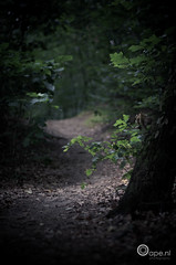 My way of thinking (Oape) Tags: road light shadow tree green nature leaves forest way leaf woods flora dof outdoor path bos