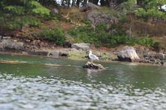DPP_3835 (dncummings) Tags: portsmouth new hampshire kayak outdoors nature photography ocean sea atlantic coast
