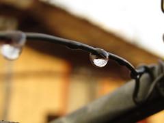 IMG_1964 (Pablo_sc) Tags: gota rain difuminado fondo winter drop reflejo reflextion focus enfoque