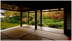 Genko-an temple, Kyoto, Japan (Damien Douxchamps) Tags: japan  japon kansai  kinki  kyoto   northern north genkoan genkouan  temple     moss  momiji autumncolours mapletree fallfoliage   stonelantern  japanesegarden  tatami  shoji