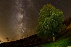 MW0_3395 (wermei) Tags: milchstrasse milky way tree night saalfelden zell am see salzburg leogang long exposure