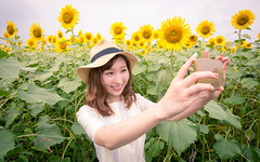 Young woman taking selfie picture with smartphone in sunflower field (Apricot Cafe) Tags: asianethnicity canonef1635mmf28liiusm japan kanagawa enjoy happiness nature oneperson outdoor refresh strawhat summer sunflower traveldestinations vacation walking weekendactivities woman youngadult zamashi kanagawaken jp img647039
