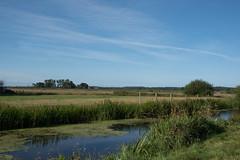 rural (=Mirjam=) Tags: nikond750 bergennh paddenpad rural landscape 52weeksof2016 hyperfocal 35mm blue sky green grass water ditch summer september 2016