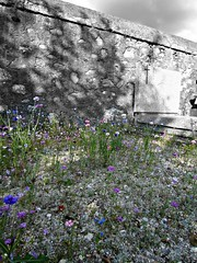 Cemetery (AmyEAnderson) Tags: outdoor graveyard cemetery cross flowers carnations gravemarker grave wall stone annecy france europe rhonealps hautesavoie alps monochrome bw blackandwhite colors blues pinks violets