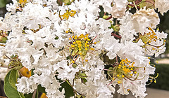WHITE BLOOMS (sadler0) Tags: city town hats blooms white alley texas rogersadler