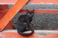 Today's Cat@2016-09-22 (masatsu) Tags: cat thebiggestgroupwithonlycats catspotting pentax mx1